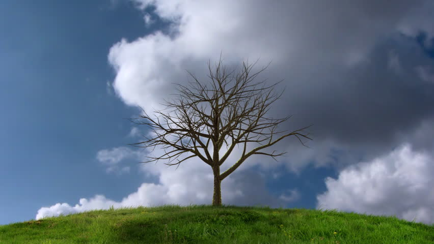 HD Animation of a growing tree in front of timelapsing clouds - HD stock footage clip