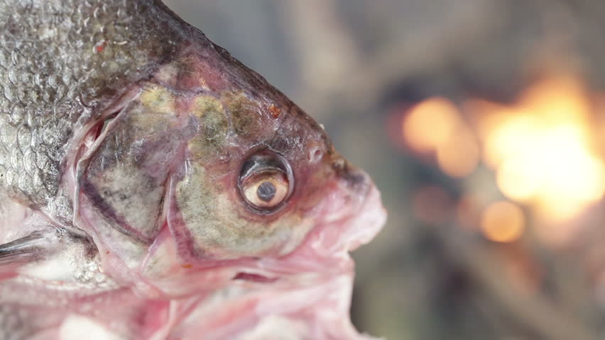 Cooking fish on an open fire stock footage video 6826891 for Fish on fire