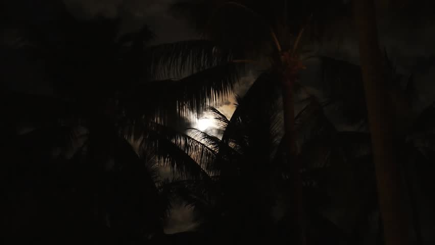 Coconut Palms and Bright Moon. Tropical Night. Speed up. HD, 1920x1080. - HD stock video clip