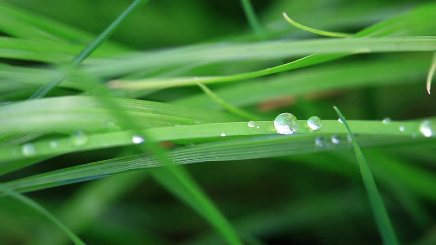Water drop on green leaf. Outdoors  - HD stock footage clip