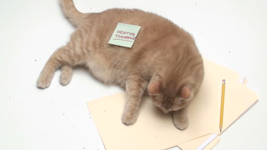 Cat with post it note MEETING TODAY - HD stock footage clip