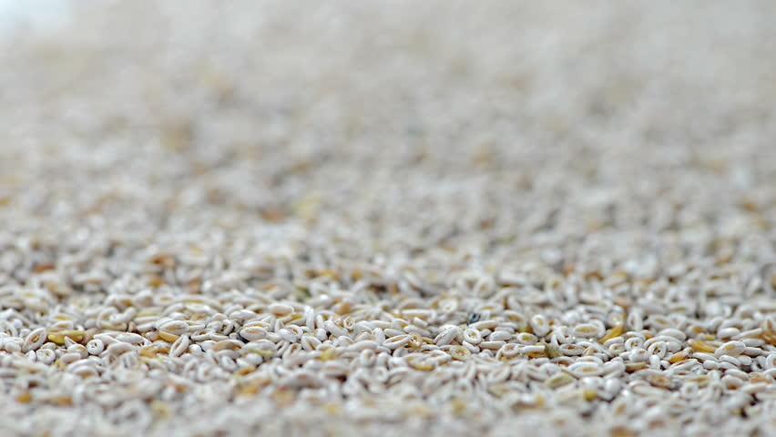 Psyllium Seeds (not loopable) | Shutterstock HD Video #6995134