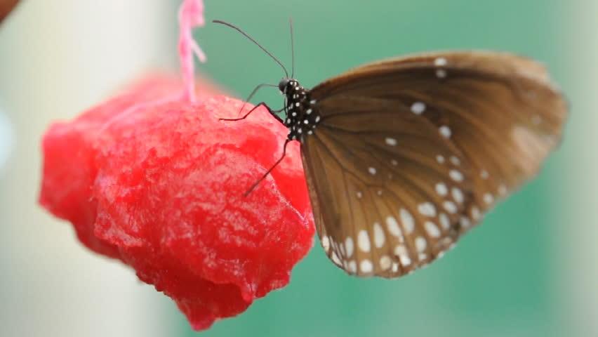 Beautiful butterfly  | Shutterstock HD Video #6995782