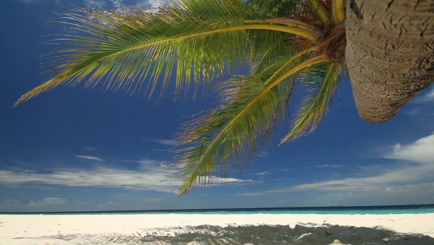 view from under palm tree at sandy beach