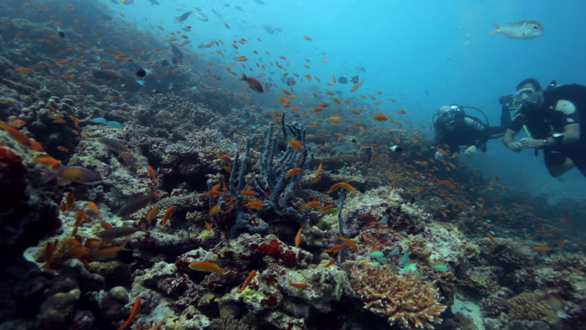 reef with two divers  - HD stock footage clip