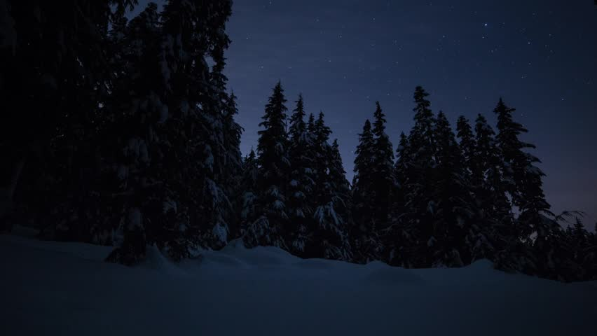Time lapse of the night sky in a snowy forest