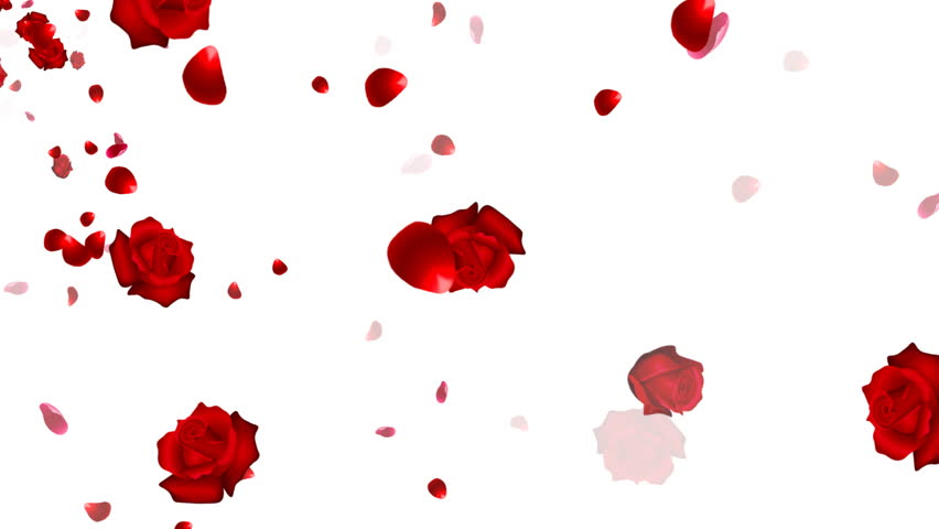 A looping background with falling roses and petals. Alpha matte included. - HD stock video clip