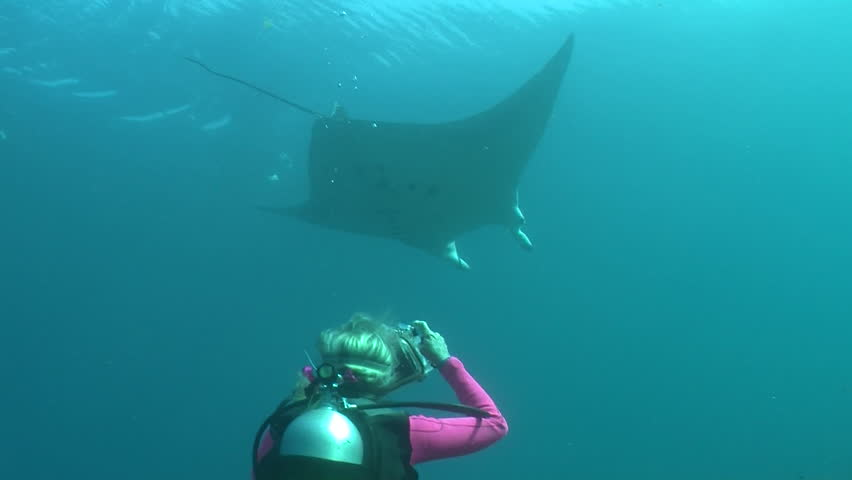 RAJA AMPAT, INDONESIA- CIRCA-2012- Scuba diver photographing a Manta Ray swimming underwater in Indonesia. - HD stock footage clip