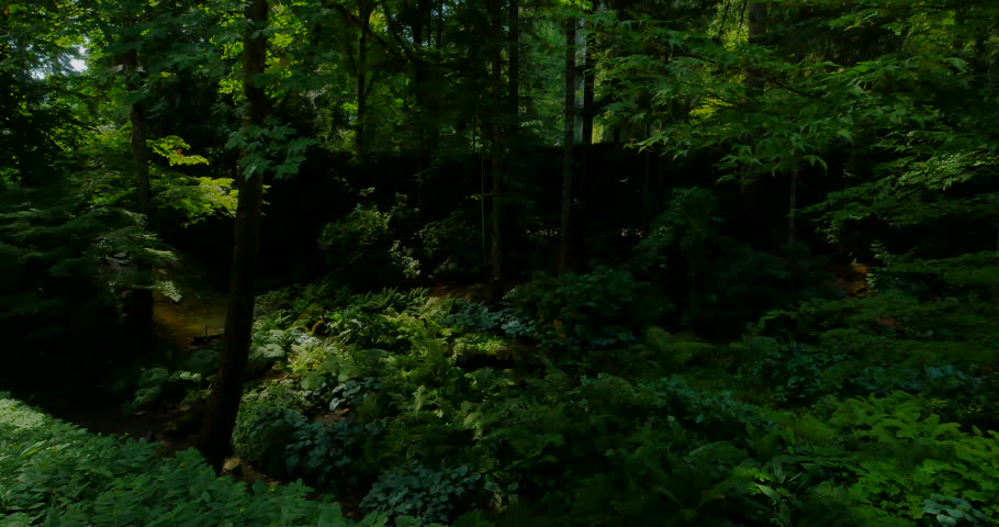 Dark Rain Forest, Slow Camera Pan through Ferns and Trees | Shutterstock HD Video #7200946