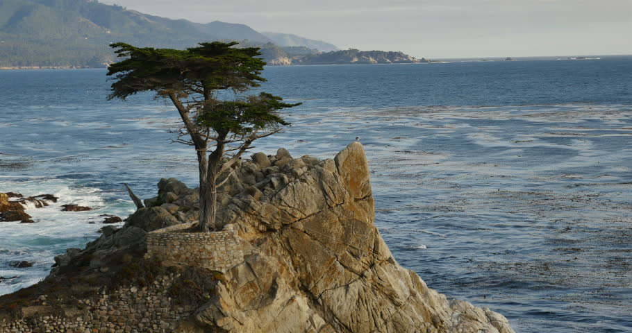 Lone Cypress 03 Sunset Ocean 17 Miles Drive Monterey California - 4K stock footage clip