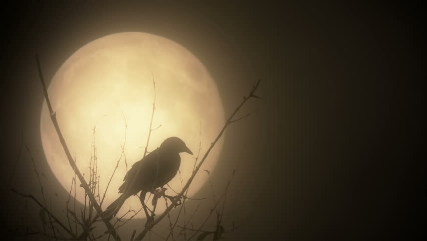 Raven illuminated by a blood moon | Shutterstock HD Video #7223887