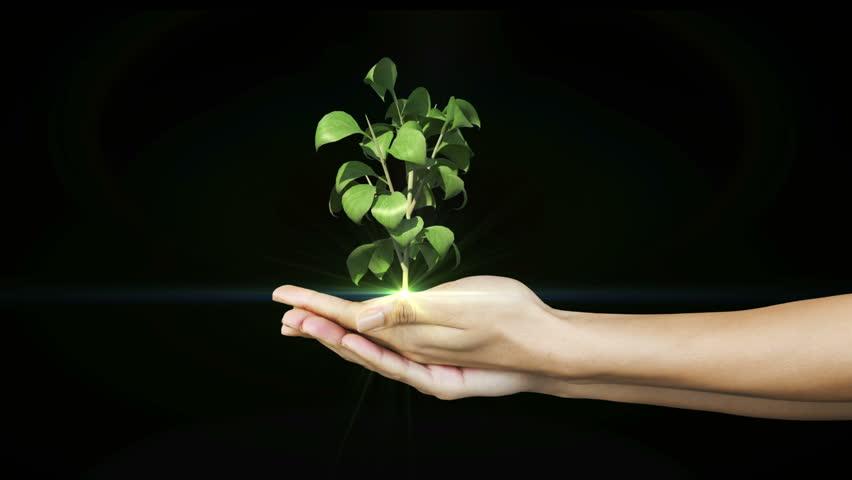 hands presenting digital green plant growing on black