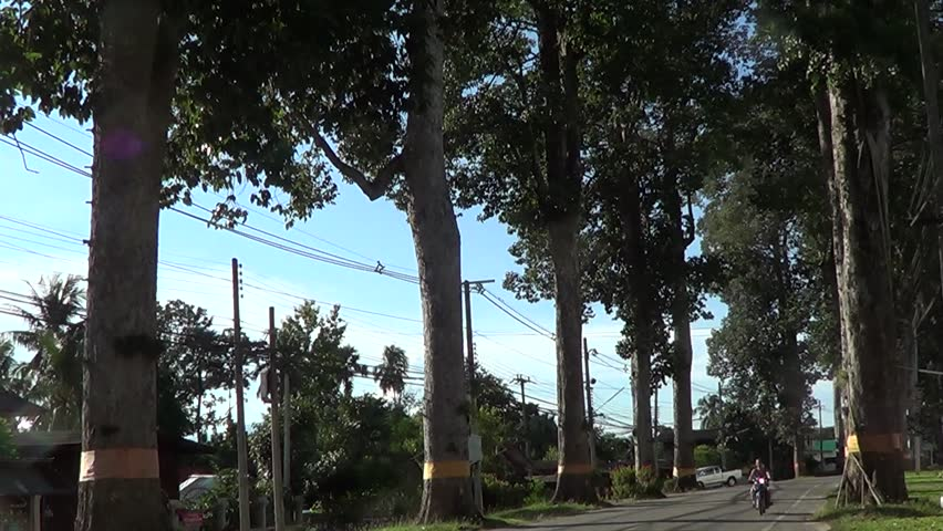CHIANGMAI , THAILAND - SEPTEMBER 10 2014:  Green Road No.106 Between chiangmai and Lamphun province. Footage at road in Chiangmai, thailand. - HD stock video clip