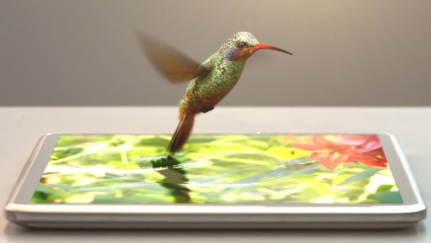 tablet pc and humming-bird, 3d animation, 4K