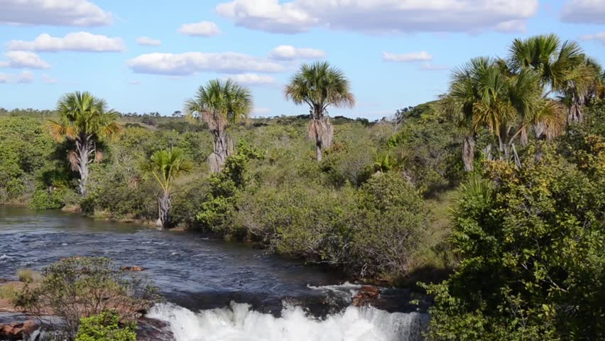 Nile River Reeds