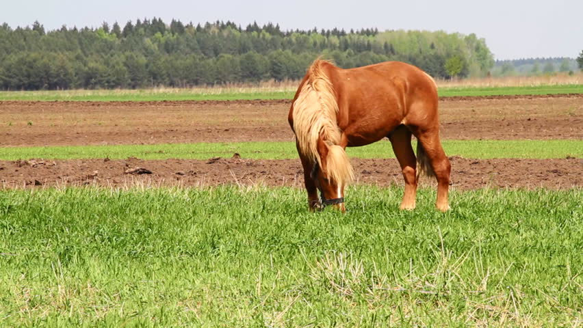 horse on green meadow - HD stock footage clip