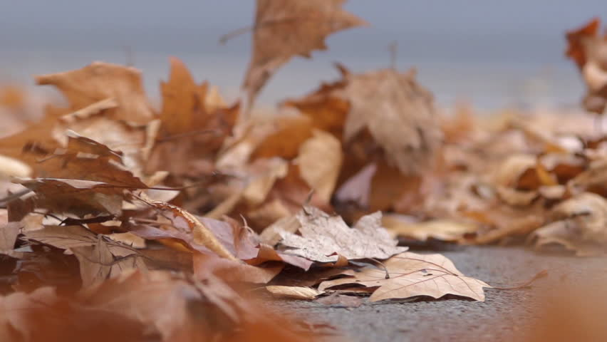Slow Motion Close Shot Of Autumn Leaves Being Gently Moved From The Ground By The Autumn Wind | Shutterstock HD Video #7413481