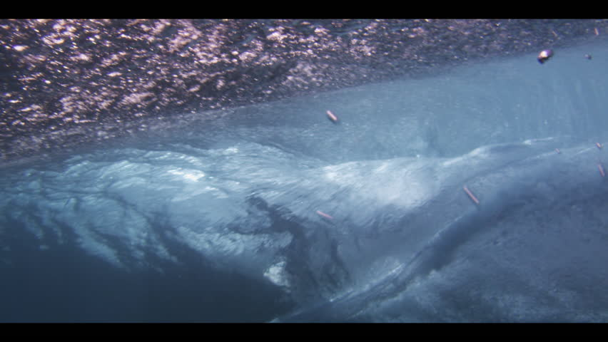 Underwater view of a surfer who rides along a wave