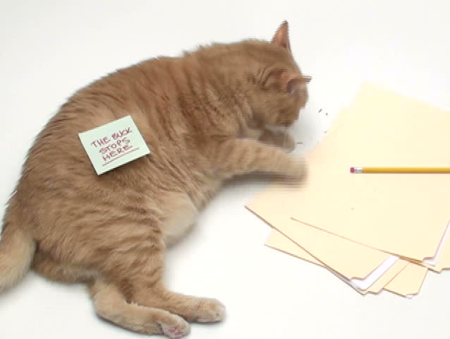 """Cat with post it note """"The Buck Stops here"""" - NTSC - SD stock footage clip"""