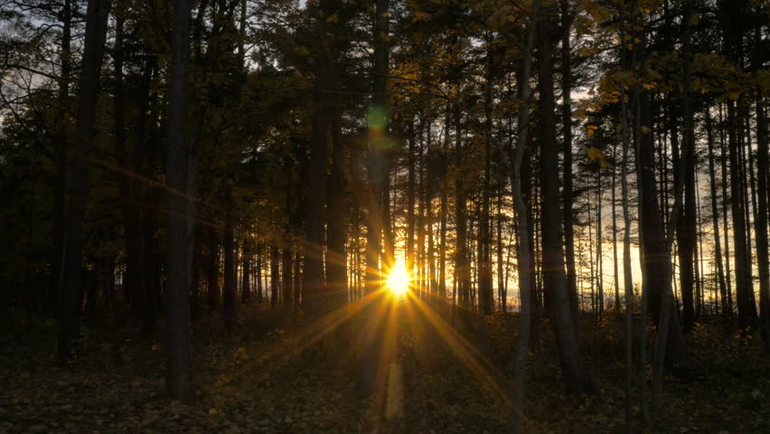 Sunlight through Trees in Forest at Sunset. Camera Gliding. Shot in 4K, so you can easily crop, rotate and zoom. ProRes codec - Great for editing, color correction and grading.