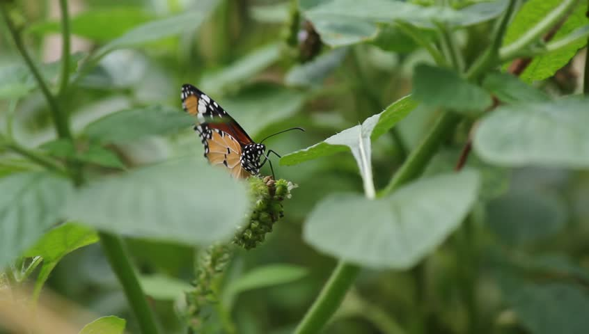 Butterfly on garden | Shutterstock HD Video #7662718