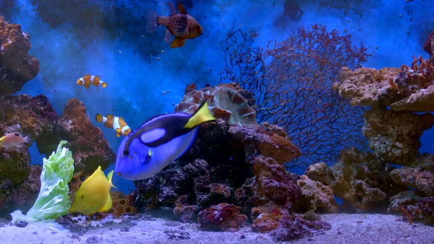 4k hd amazing goldfish - photo #14