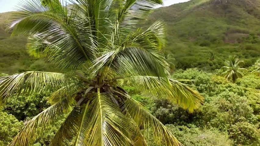 Coconut Tree Closeup Stock Footage Video 7757605