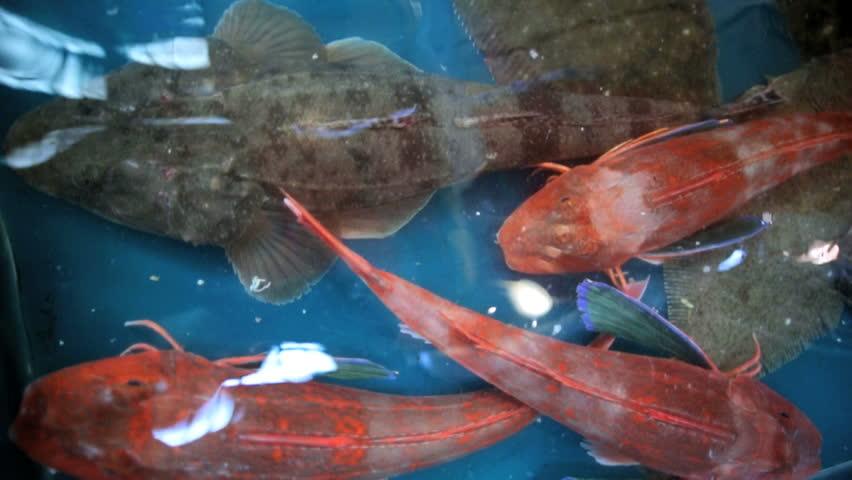Japanese male fresh pacific ocean sea fish tsukiji fish for Pacific fish market