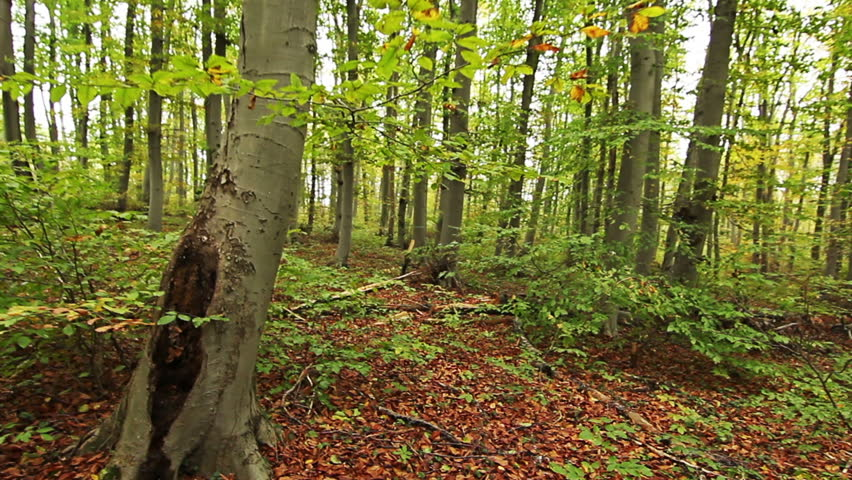 POV. Walking through forest, steady cam shot. - HD stock video clip