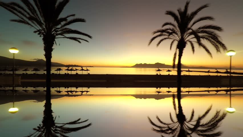 palm trees reflecting in sea water background. beautiful silhouette sunrise sky