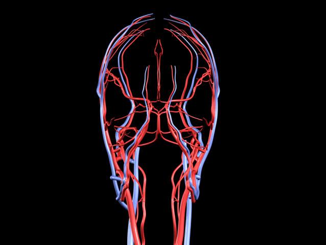 NTSC Brain Arteries and Veins Rotation Loop