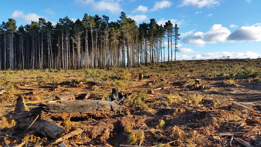 deforestation national environmental policy Current policies on reducing deforestation global deforestation i introduction the rate of deforestation has increased exceptionally over the past few decades however with the lack of national and global governance, it continues to increase.