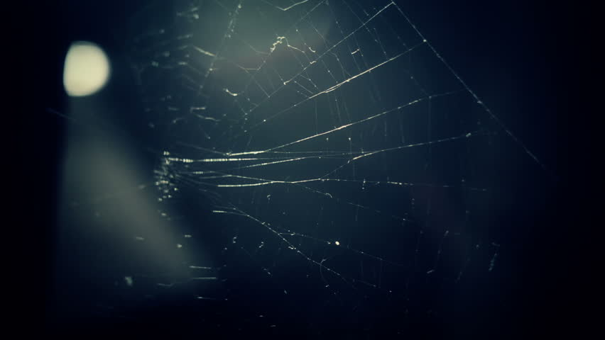 Spider Web close up HD stock footage. An abandoned Spider's Web in close up with natural light shimmering on the strands. Filmed with the Blackmagic Cinema Camera.