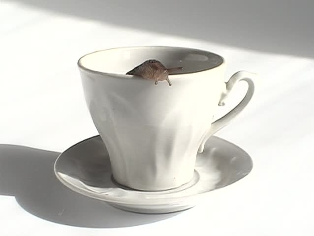 Pouring Water Into An Empty Tea Cup Stock Footage Video ...