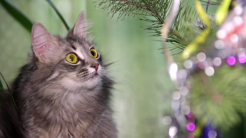 Cat near the Christmas tree | Shutterstock HD Video #8015401