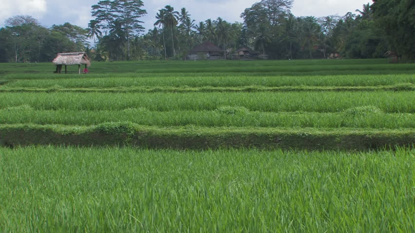 Rice paddy field with time lapse sunlight stock footage for Terrace farming definition