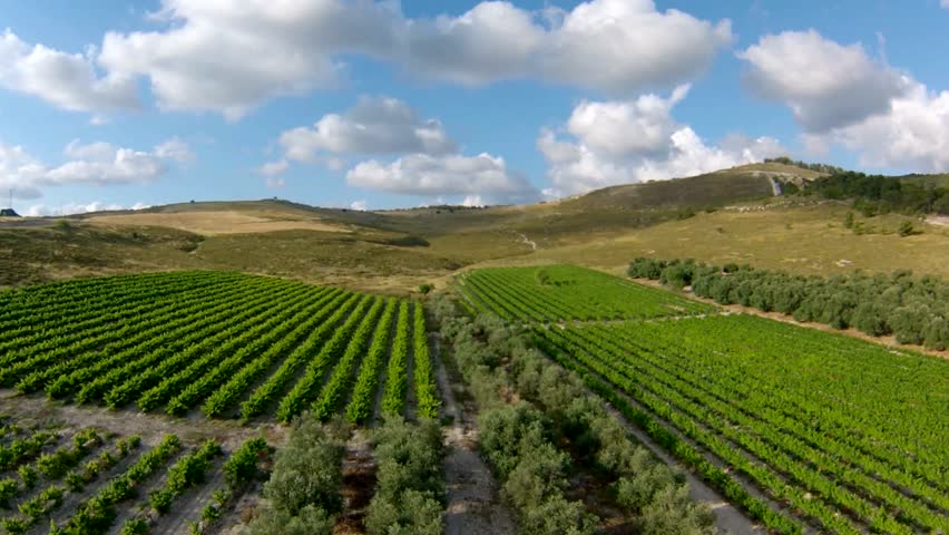 flyover over vineyard and olive grove, Israel