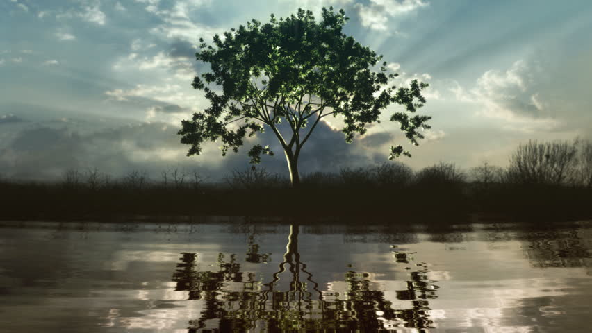 Timelapse of a growing tree reflecting in a lake. Sunset clouds with god-rays in the back.