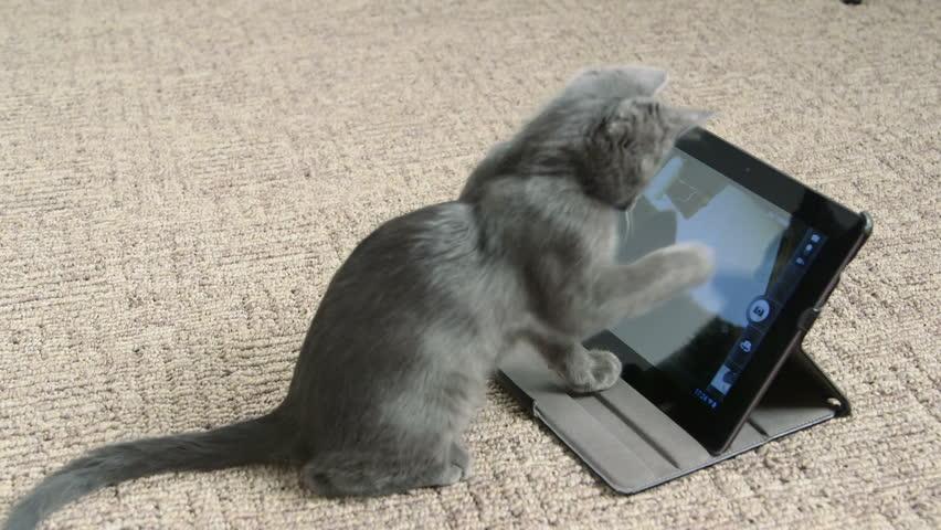 Cute kitten playing with digital tablet computer taking selfie | Shutterstock HD Video #8369749