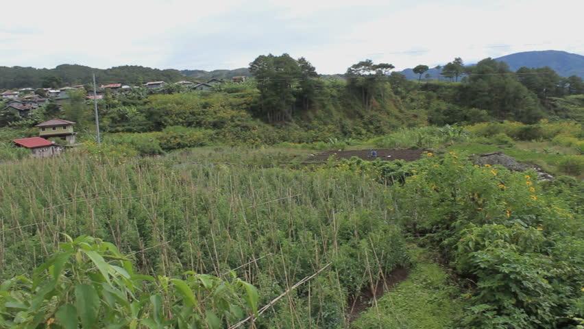 Rice fields in Sagada, Philippines
