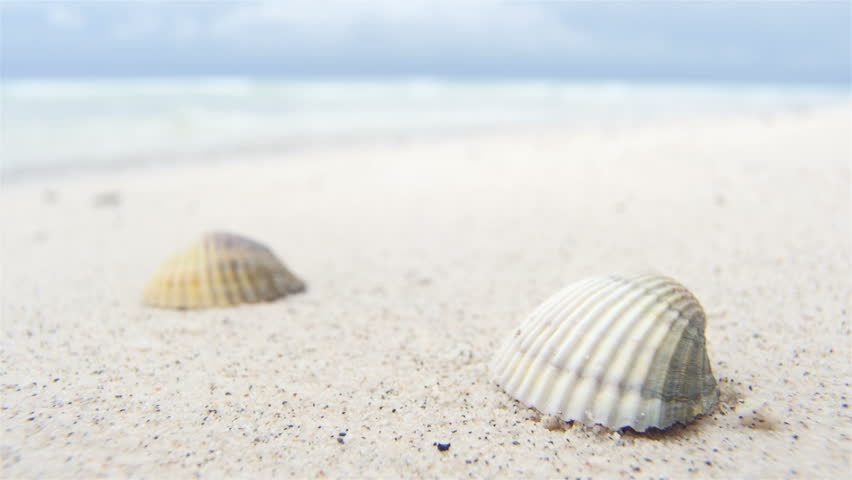 Big Cone Shell On The Egyptian Beach Stock Footage Video