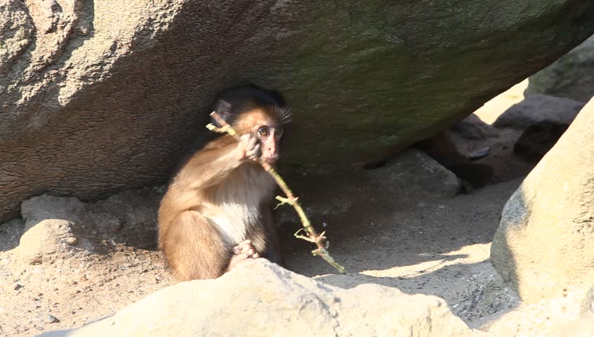 Monkeys At Zoo, Oita, Japan Stock Footage Video 8461663 - Shutterstock