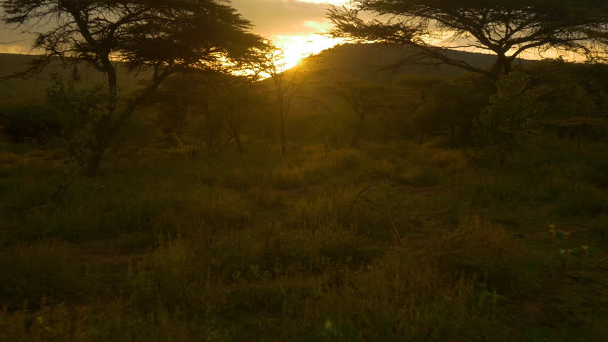 AERIAL: Sun setting behind acacia trees in Africa
