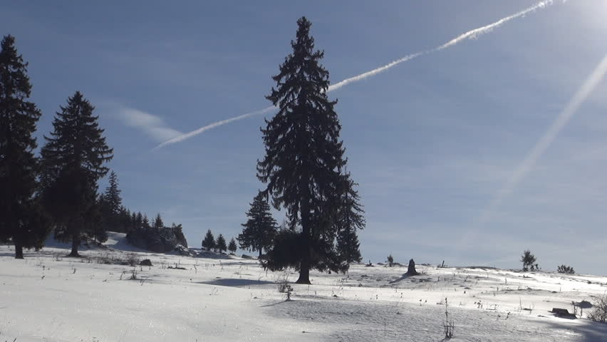 Beautiful fir in sun light. Winter landscape in a sunny day. - HD stock video clip