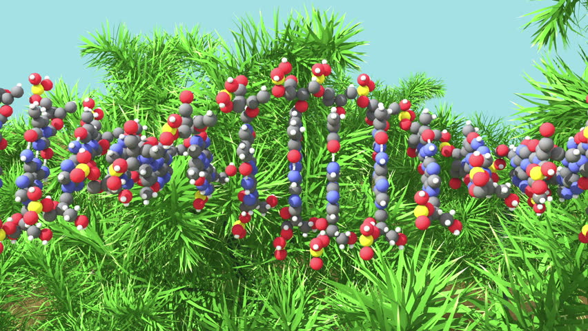 Plant DNA or GMO concept