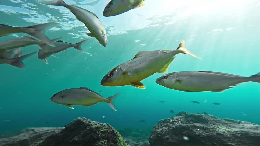 Mediterranean predator Footage #page 2 | Stock Clips
