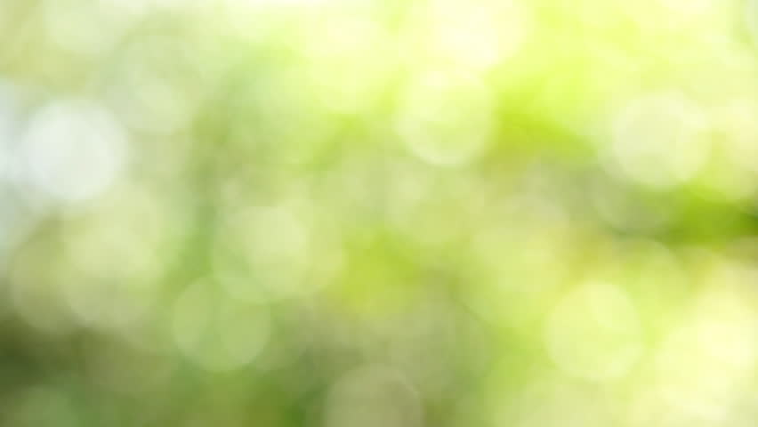 Defocused abstract nature background with green leaves and bokeh lights. - HD stock footage clip