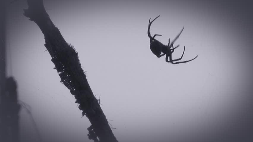 蜘蛛网视频视频-站酷海洛创意素材视频,图片,音日日的正版破图片