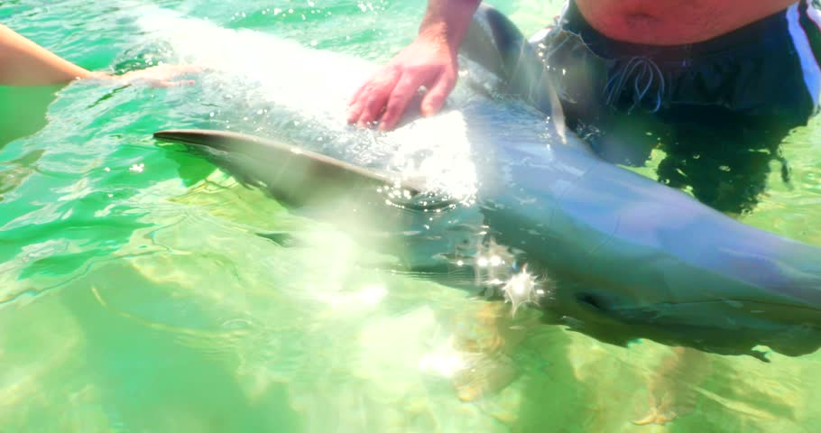 Man Plays with Blue Nose Dolphin in Zoo Aquarium, Caribbean