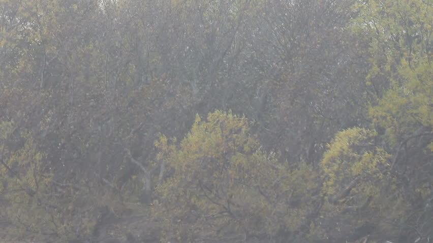 Autumn. A rain. Yellow leaves. The nature - HD stock video clip